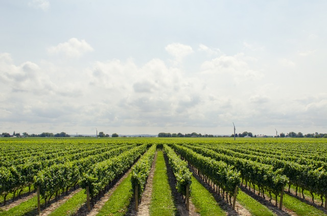 Produzione vini tipici toscani