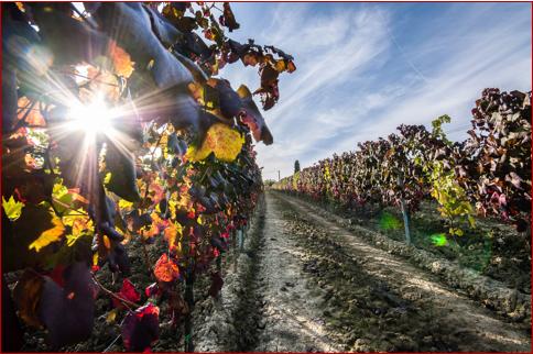 produttori vino toscano